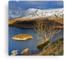 Haweswater Tree Canvas Print