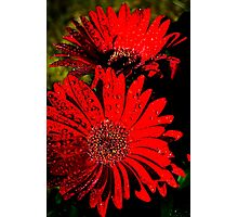 Red Raindrops Duo Photographic Print