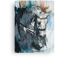 Dressage No.6 - Grey Stallion in Focus Canvas Print