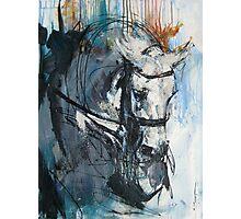 Dressage No.6 - Grey Stallion in Focus Photographic Print