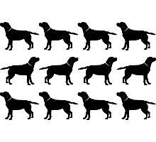Black Labradors Photographic Print