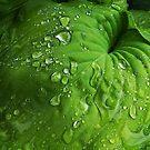 Taken in the Rain by Jing3011