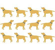 Golden Labradors - Blue Collar Photographic Print