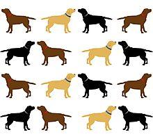 Labradors Photographic Print