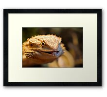 Cheeky Smaugling's Tongue Framed Print