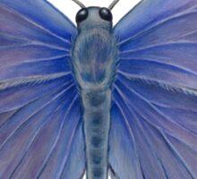 Karner Blue Butterfly Sticker