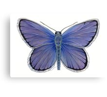 Karner Blue Butterfly Canvas Print