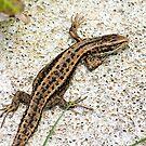 Lizard by Anthony Thomas