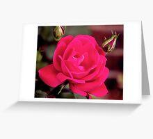 2016 Blooms 9 Greeting Card