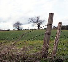 Dilapidated Fence by Matthew Walters