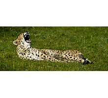 Big Toothy Yawn Photographic Print