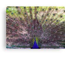 2016 Peacock Canvas Print