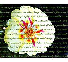 Moss Rose Portulaca Photographic Print