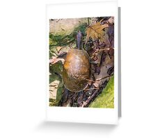 2016 Box Turtle Greeting Card