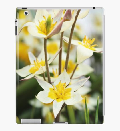 White and Yellow Blooms iPad Case/Skin