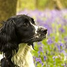 Springer  by yampy