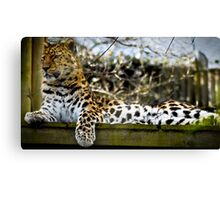 Leopard Watch Canvas Print