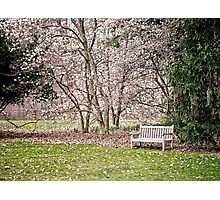 Park Bench under Magnolia Trees Photographic Print