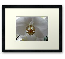 Backlit Orchid Framed Print