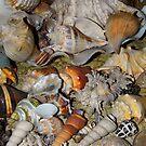My Shells by WildestArt