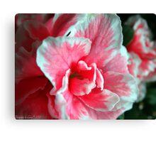 Azalea Close-up Canvas Print