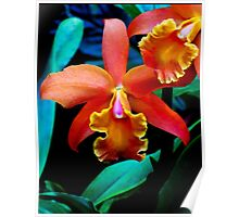 Magnificent Orange Yellow Orchids Poster