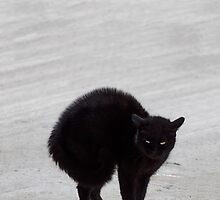 Black Cat, Witch's Familiar by Jane McDougall