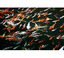 Fish Frenzy Photographic Print