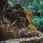 Tree Stump by Craig Russell-Green