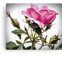 Tara Roses Canvas Print