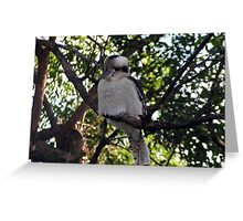 Kookaburra Sitting in an Old Gum Tree Greeting Card