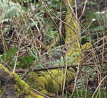 Moss, Ferns and Branches by kalaryder
