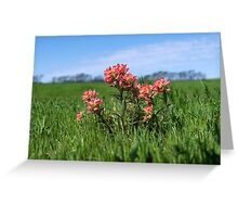 Beautiful Indian Paintbrush flowers closeup Greeting Card