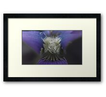 violet macro on a cloudy day Framed Print