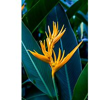 Yellow Florescent Heliconia Photographic Print