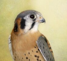 American Kestrel Sticker