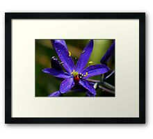 Ladybug on Purple Framed Print