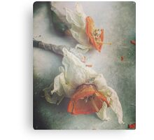 Faded Daffodils Canvas Print