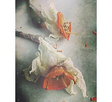 Faded Daffodils Photographic Print