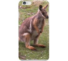 Kangaroo -  Yellow Footed Rock Wallaby iPhone Case/Skin