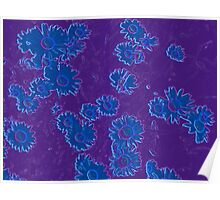 Daisies (blue & purple) Poster