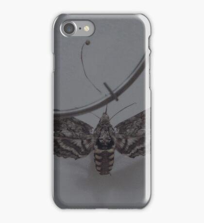 { manduca sexta } iPhone Case/Skin