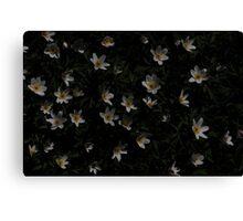 Anemones Canvas Print