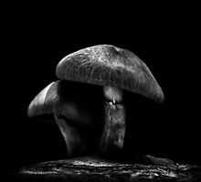 Toadstools On A Toronto Trail No 6 by Brian Carson