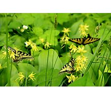 Butterfly Trio Photographic Print