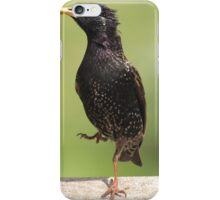 Starling Stomp iPhone Case/Skin