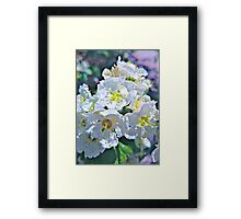 Beautiful White Flowers Framed Print