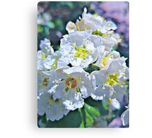 Beautiful White Flowers Canvas Print