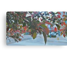 Through The Leaves (Painted) Canvas Print
