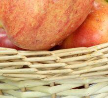 Fall apples assorts close view. Sticker